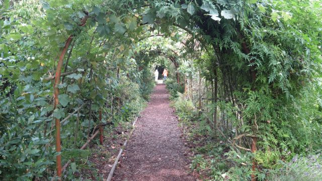 Arched pathway with climbing plants.